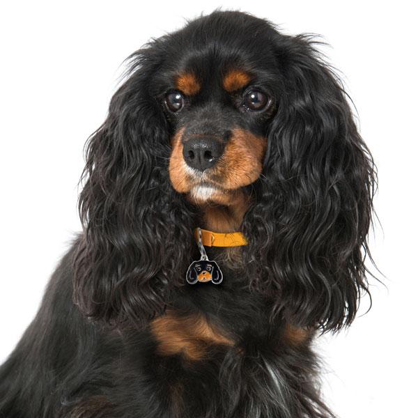 Cavalier-King-Charles-Spaniel-black-and-tan-Dog-Tag-ID-Image-nm