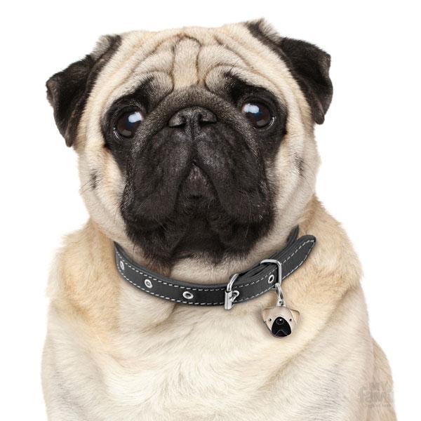 Pug-Tan-Dog-Tag-ID-Image