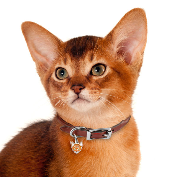 Abyssinian-Cat-Tag-ID-Img