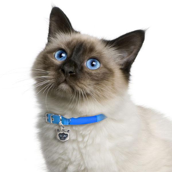Birman-Cat-Tag-ID-Img