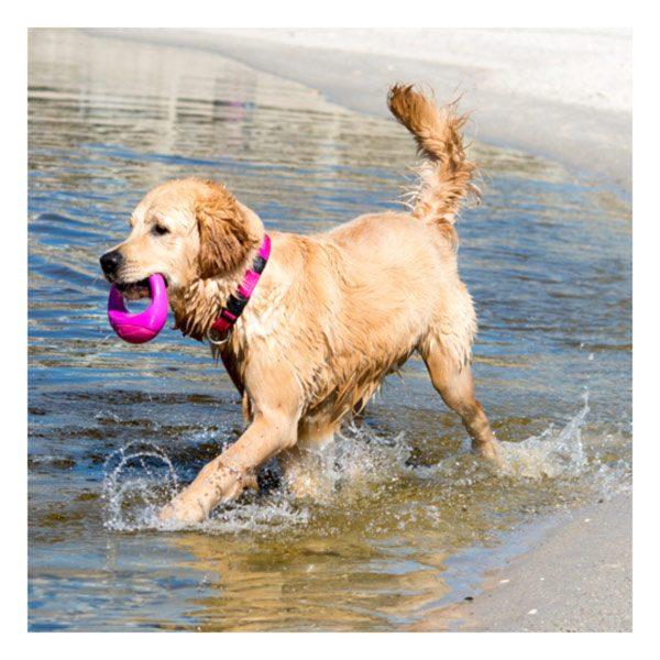 צעצוע משחק לכלב