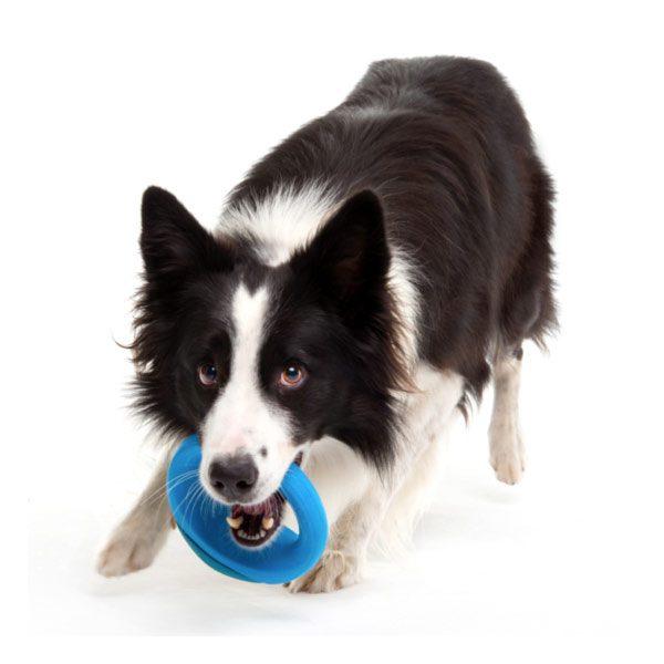pop-up-צעצוע-לכלב